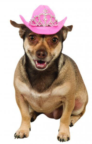 This is a knockout! A pink felt Cowgirl hat with a bling tiara attached to theu2026  sc 1 st  Pinterest & Pink Tiara Dog Cowboy Hat   dog costumes by lanna case   Pinterest ...