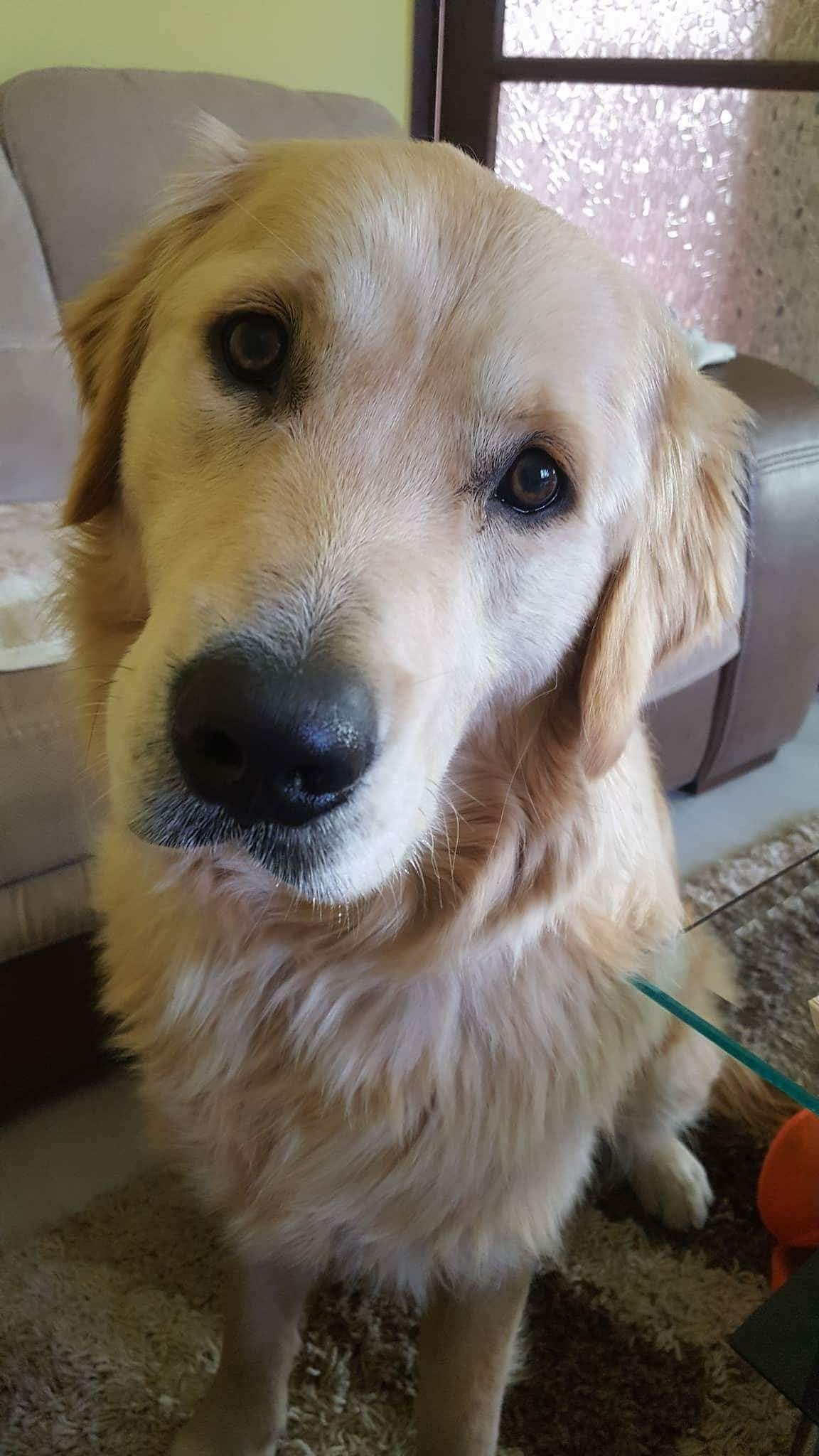 Pin by amber gruba on dogs pinterest pet pictures and dog