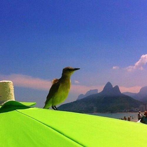 Rio de Janeiro - Brasil. Foto @rio_amo_vc