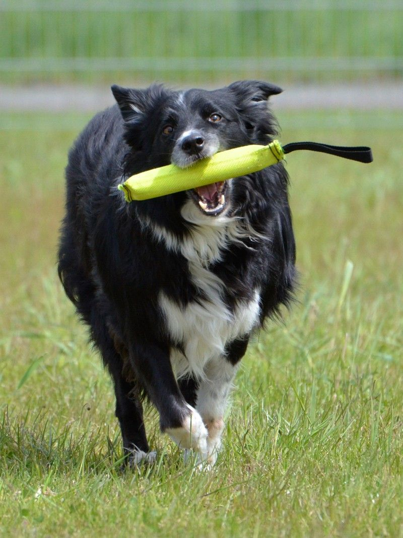 Robustes Hundespielzeug Beisswurst Aus Feuerwehrschlauch Feuerwehr Feuerwehr Geschenke Feuerwehr Magazin