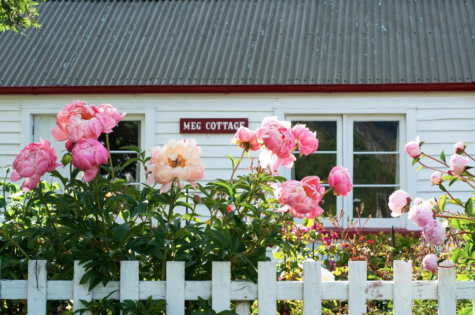 Covered in Peonies Arrowtown, New Zealand Peonies