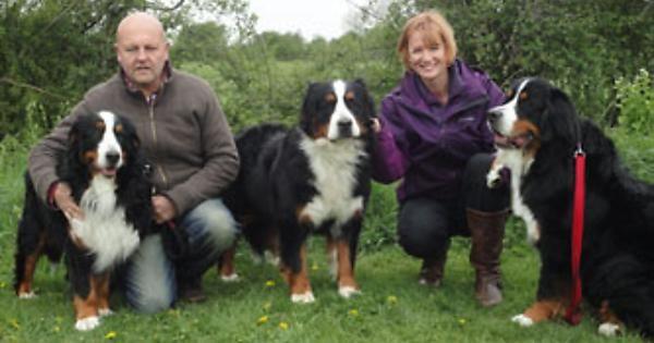 Pasturegreen Bernese Mountain Dogs.. http://ift.tt/2eEaxN4