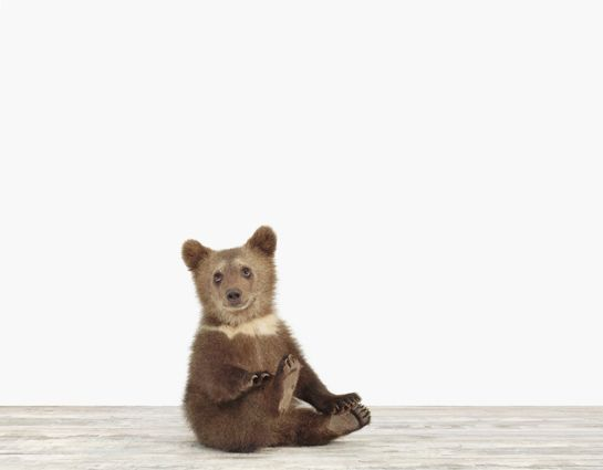 Baby Animal Photography Pictures_Bear Cub