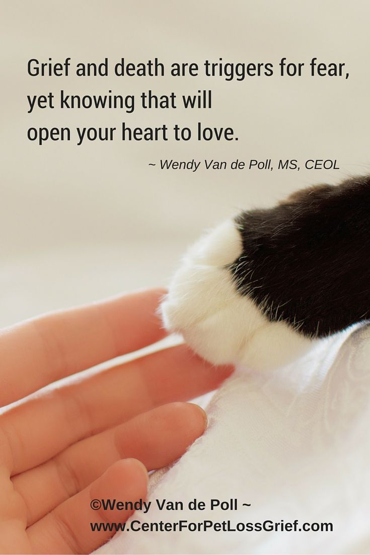 Dog Loss Quotes These Pet Loss Quotes Will Help Ease Your Heart And Soul When