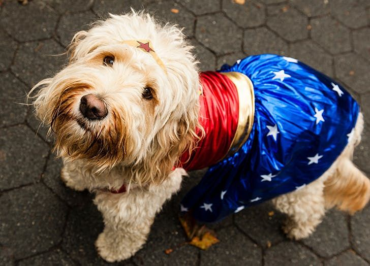 Dog & 38 Ways to Dress Up Your Dog This Halloween | Dog grooming styles ...