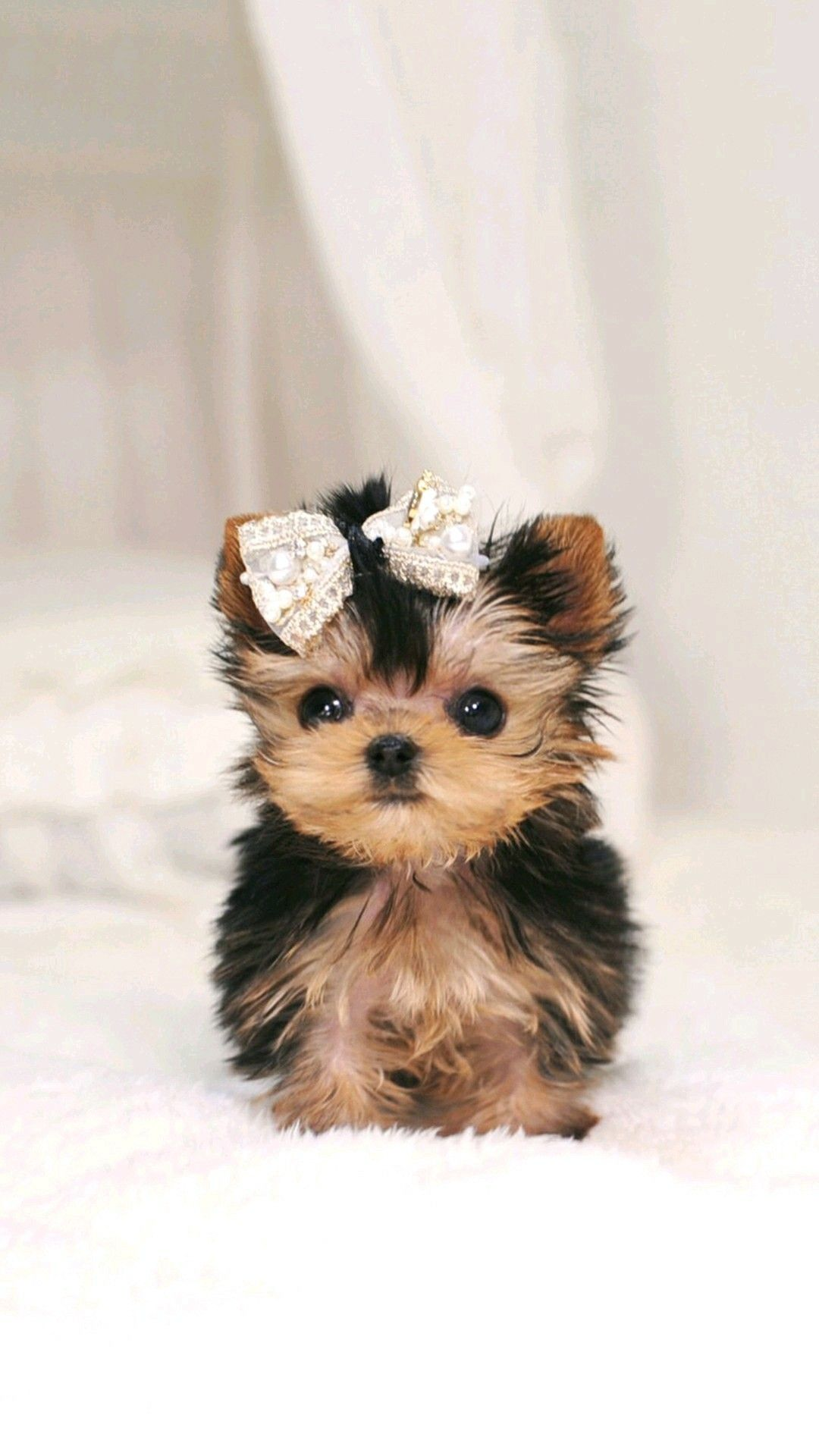 Adorable puppy Cute dogs breeds, Cute puppy wallpaper