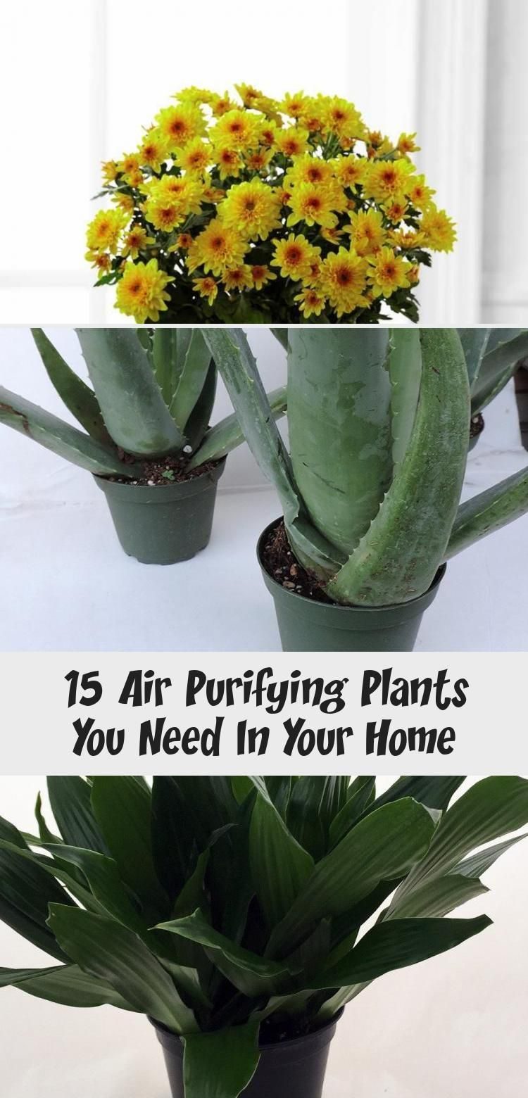 The best air purifying plants that are super low ...