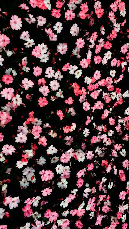 Black pink blush mini ditsy floral flowers iphone phone wallpaper black pink blush mini ditsy floral flowers iphone phone wallpaper lock screen background mightylinksfo