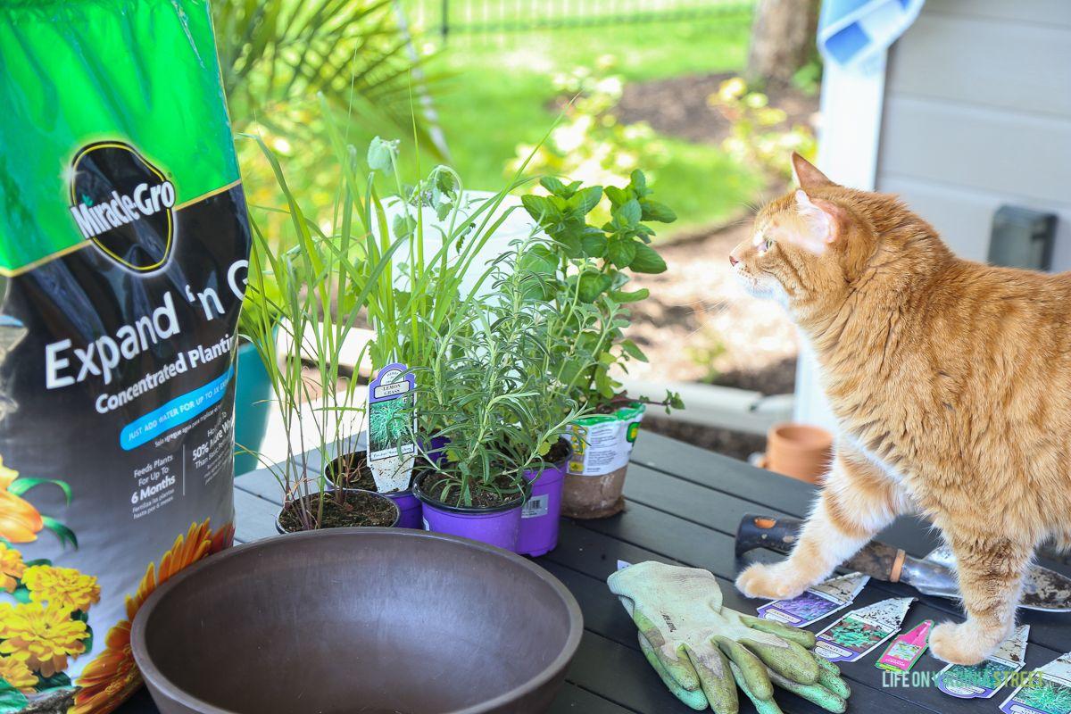 Indoor Cat Garden