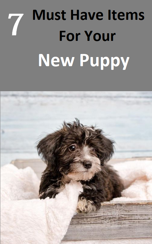 What Do You Need for a New Puppy? #newpuppy