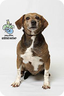 Knoxville Tn Beagle Mix Meet Lucky A Dog For Adoption