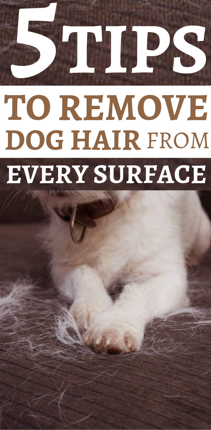 b0f8dc4a70aa8684ffc7c26912d8894a - How To Get Rid Of Dog Fur In House