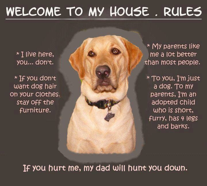 House Rules Dogs Training Your Dog My House Rules