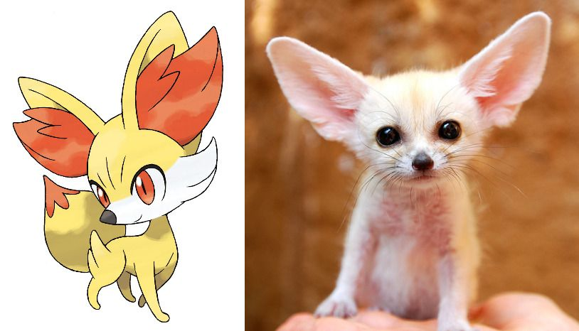 Most Pokémon names can be traced back to real creatures like Fennekin, named after the diminutive fennec fox.