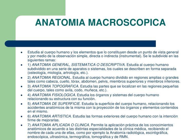 Resultado de imagen de anatomia macroscopica definición ...