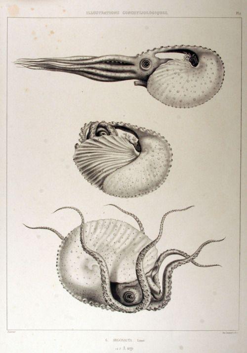Ocean Marine Life \u25b7 Printable File {or} Printed /& Shipped Starfish Nautical Guest Book Alternative Poster  Sea Shell on Navy Planks