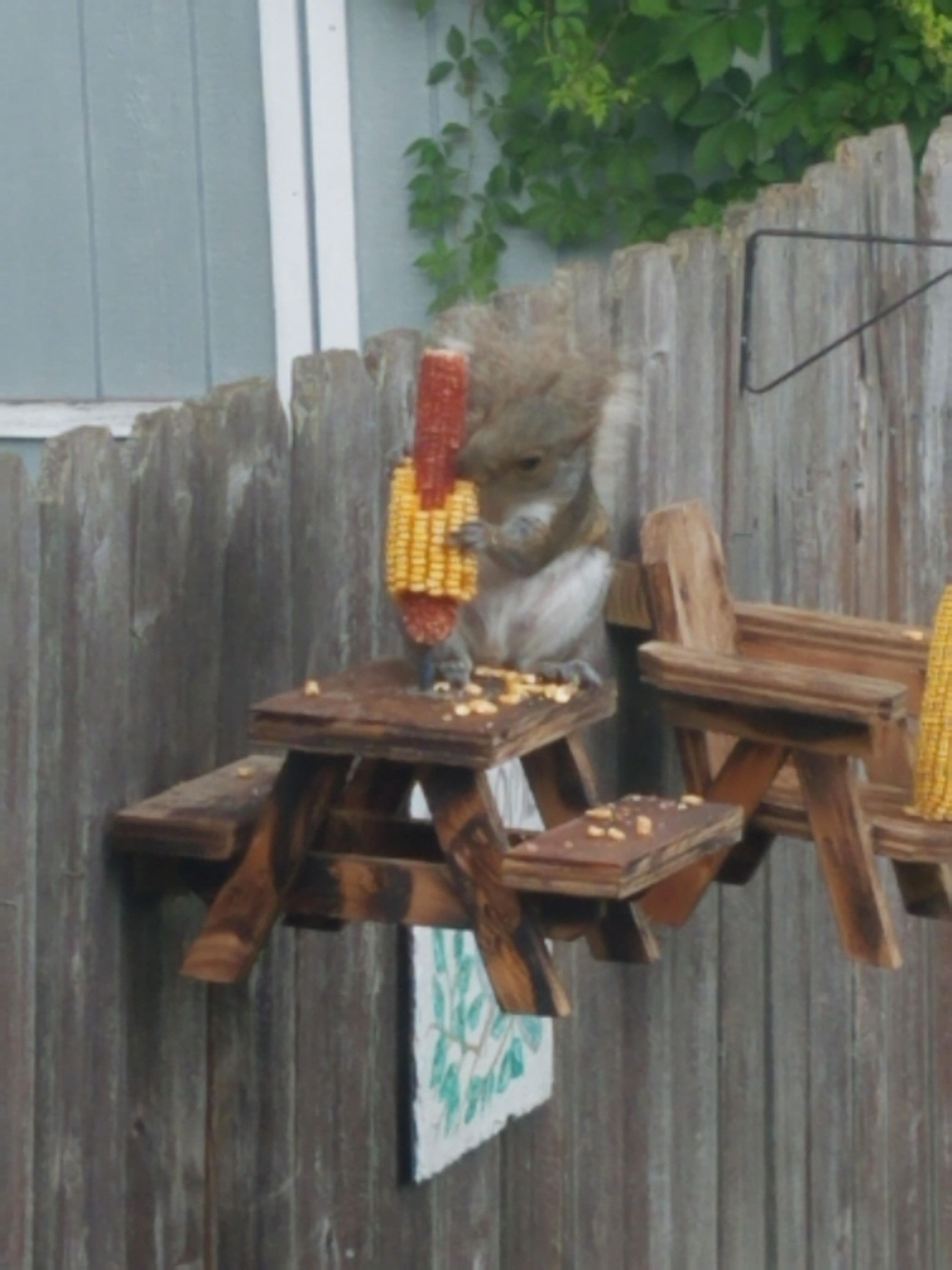 Squirrel Picnic Table Squirrel Feeder Wood Table Chipmunk Handmade 10 in x 10 in x 8 in Carved Ready To Hang With Included Hardware