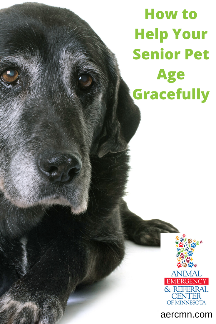 How To Help Your Senior Pet Age Gracefully Pets City Pets Aging Gracefully