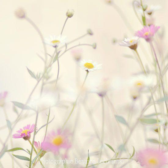 Flower photography. Nature. Pastel. Fine art by BeatriceLechtanski, $35.00