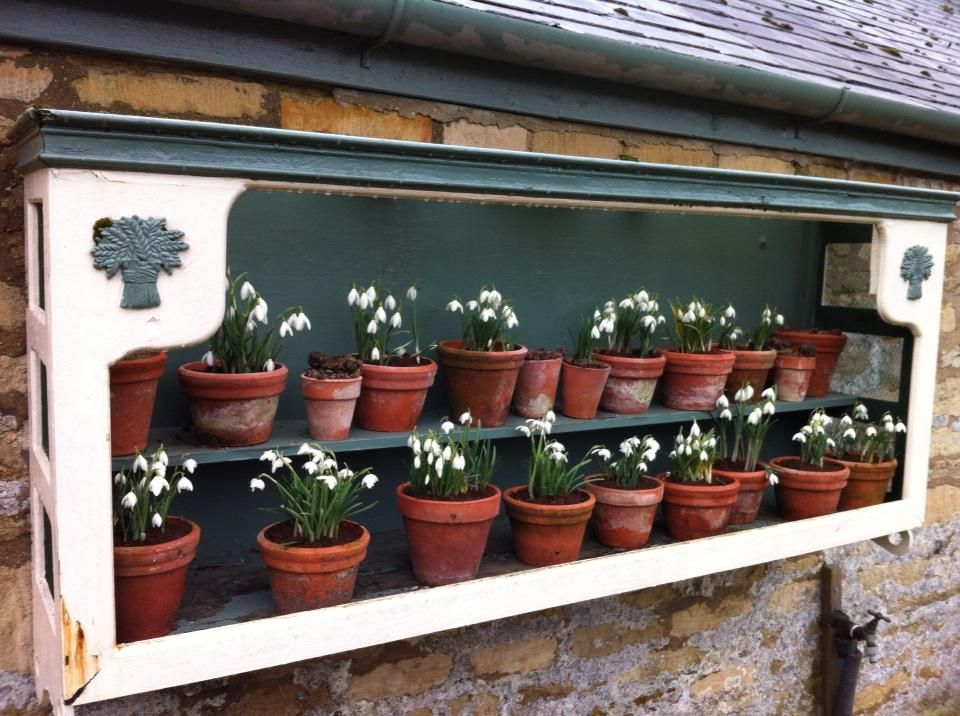 Pretty snowdrop display at @EWGardens on the first day of the season.