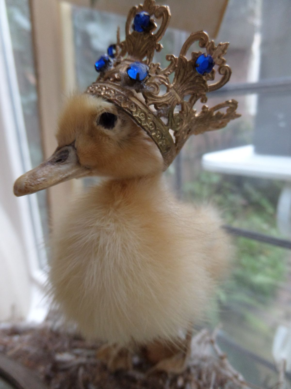 Cute little duck - photo#32