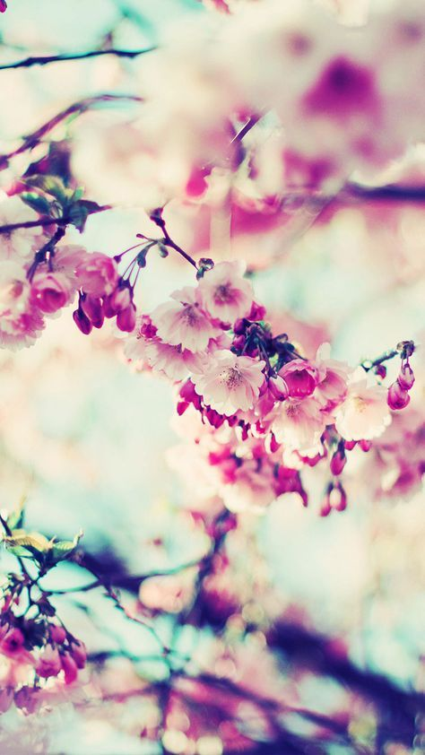 27 Floral Iphone 7 Plus Wallpapers For A Sunny Spring Preppy Wallpapers Cherry Blossom Wallpaper Pink Flowers Wallpaper Flower Wallpaper