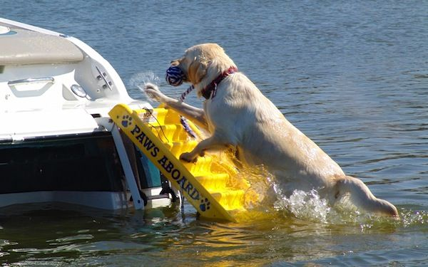 Paws Aboard Doggy Boat Ramp Make Boating Fun And Safe