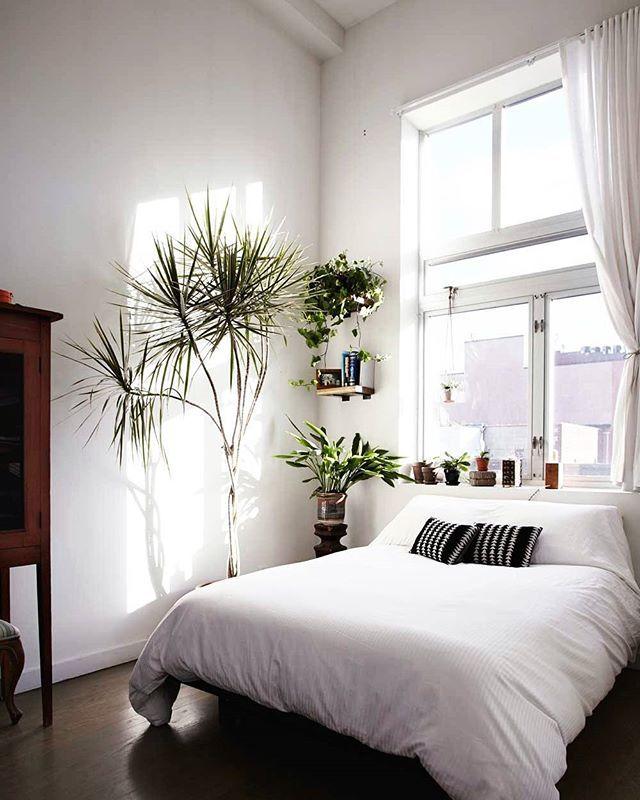 Minimalistisches Schlafzimmer Mit Grünpflanzen