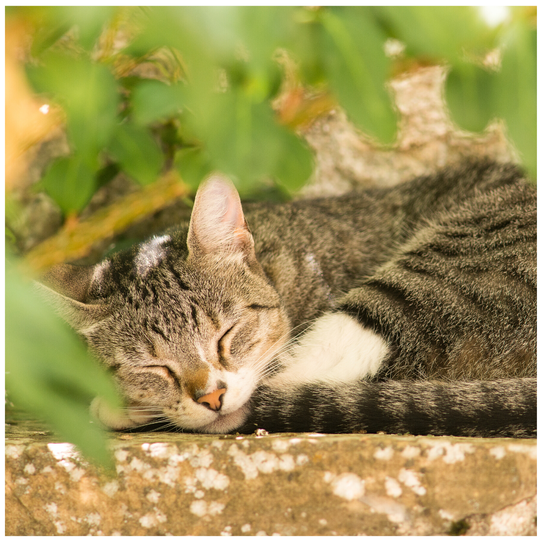 This Cat Loves To Sleep Outside In 2020 Kitten Love Personalized Pet Kitten