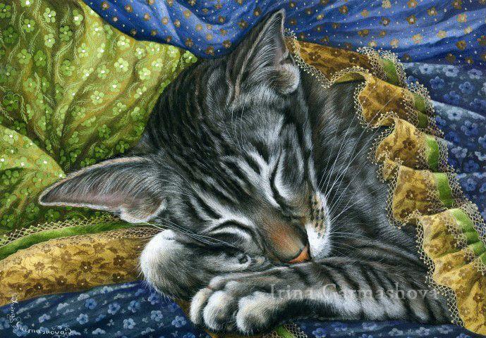 Gatos y telas