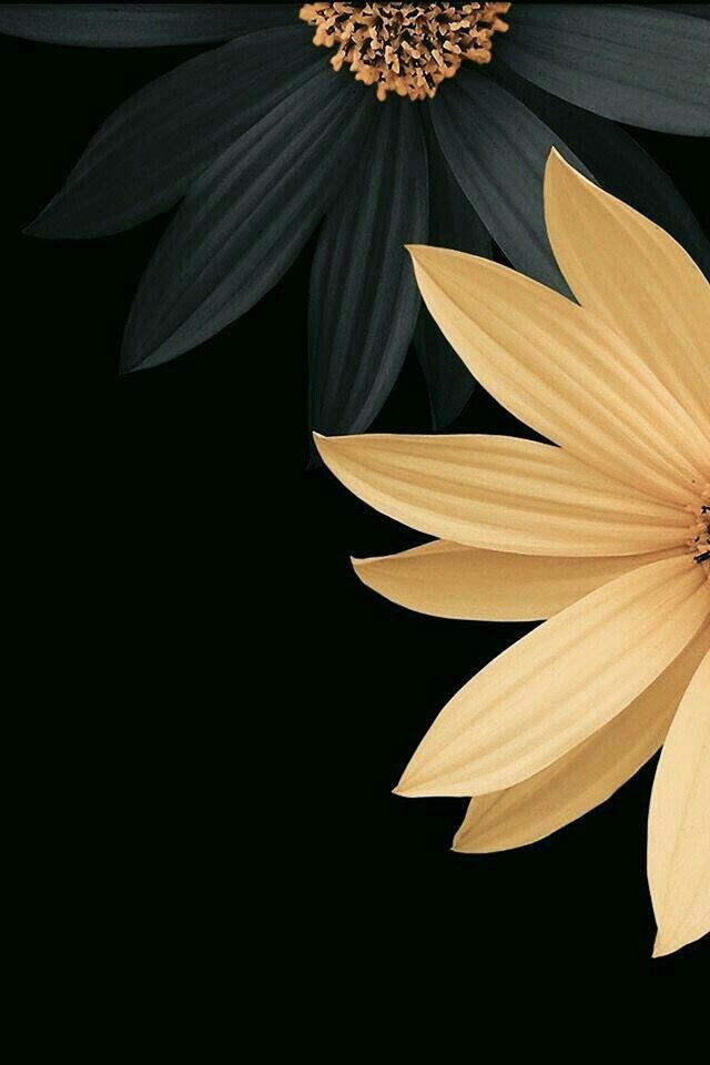 Black Gold Flower Flower Wallpaper Beautiful Wallpapers Wallpaper Contemporary gold flower wallpaper images