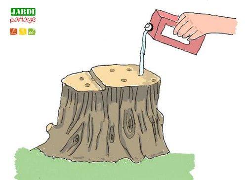 D truire une souche d arbre rapidement souche jardinage et jardins - Souche d arbre decorative ...