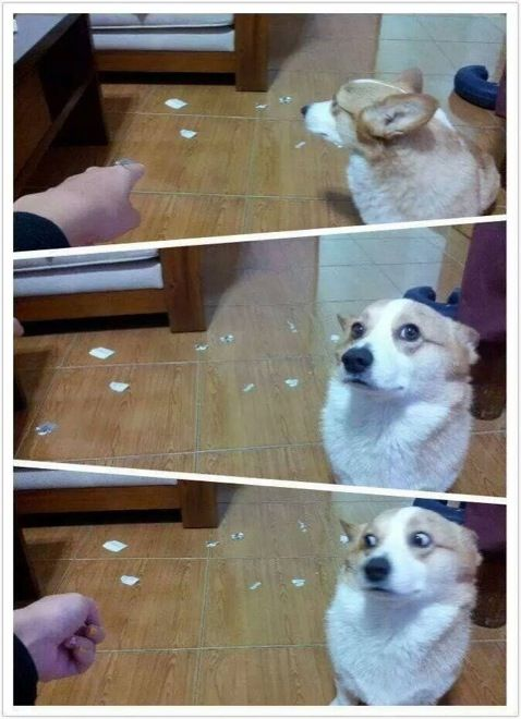 26 funny photos of guilty dogs who've been caught in the act | Just something (creative)