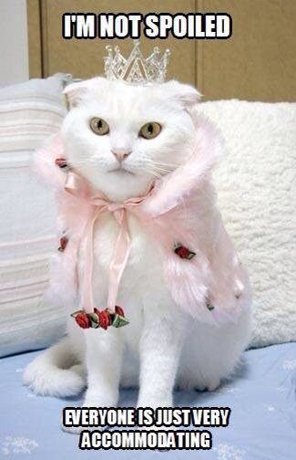 Pin By Pamela Cummins Author Dream On Funny Kitties Cute Cats