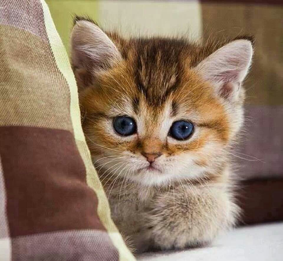 Angel Face Kittens Cutest Baby Cats Cute Cats