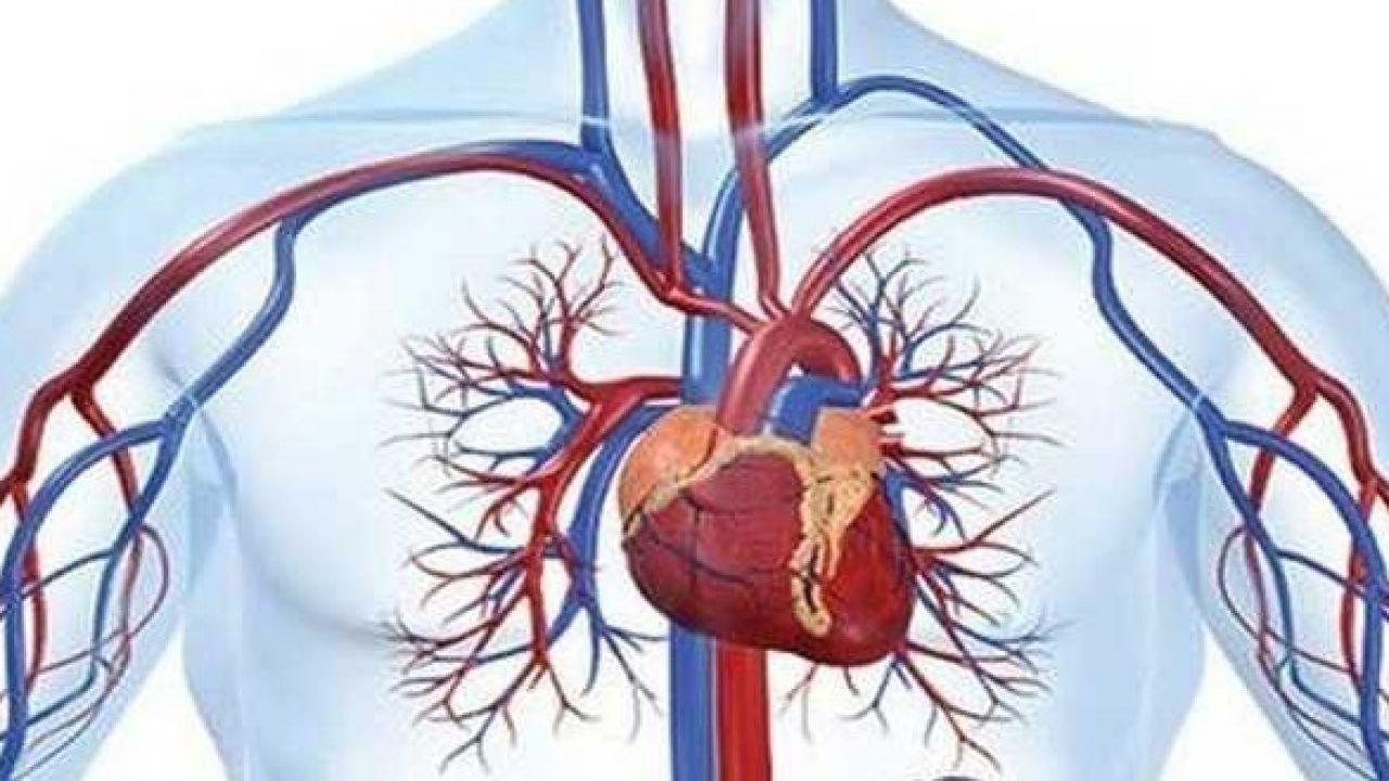 اضطراب الدورة الدموية Medical Information Arteries And Veins Medical