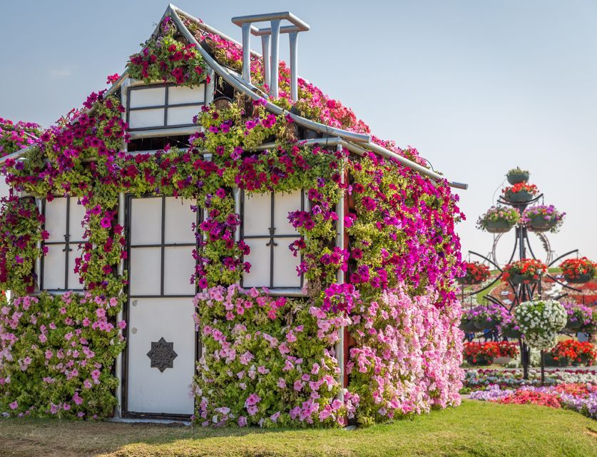 Dubai Miracle Garden Tickets and Transfer Bahçe tasarım