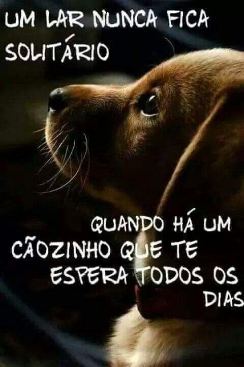 Cachorro Pet Mascote Frases Bonitas De Cachorro Pinterest