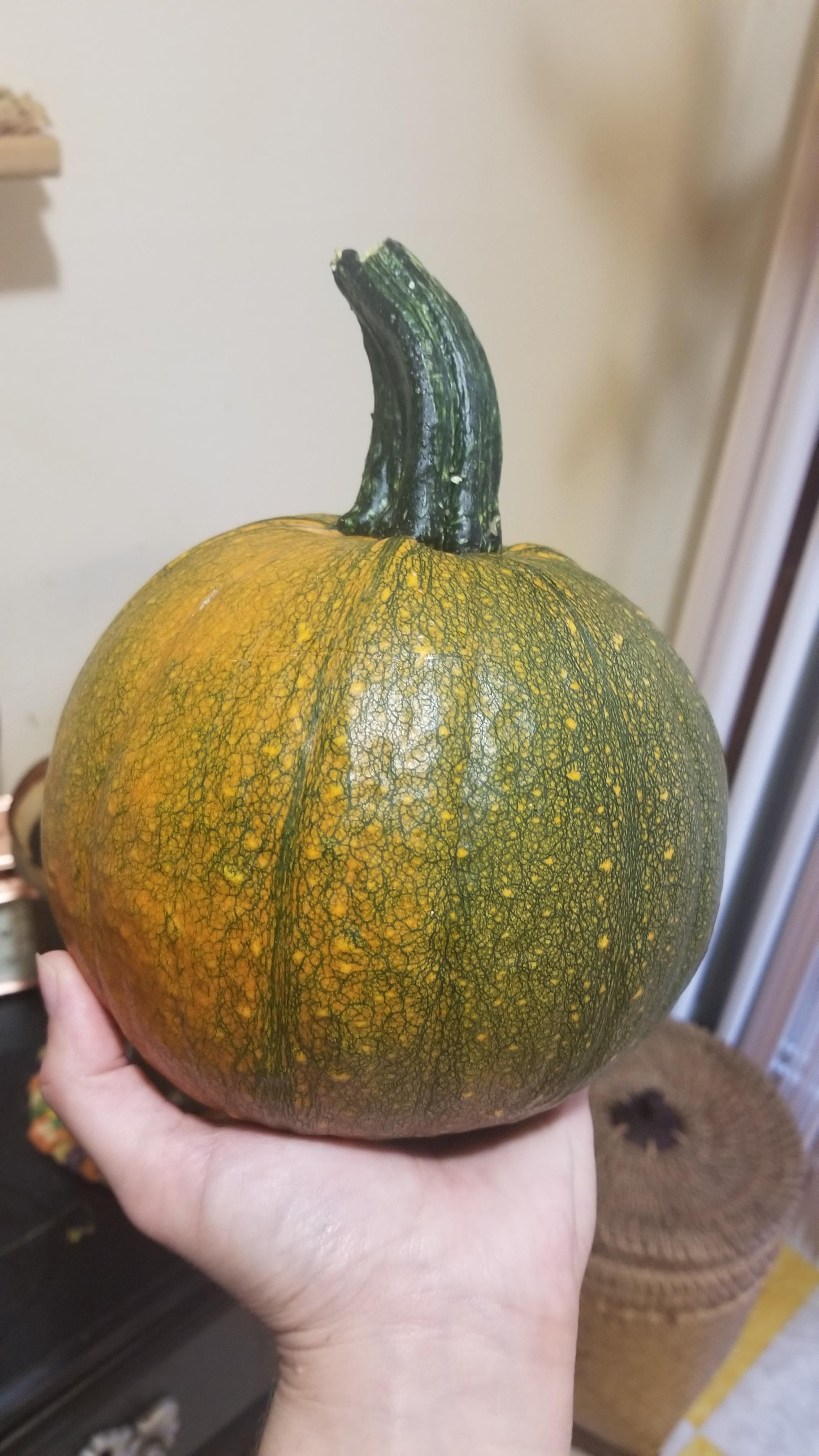 From A Volunteer Squash That Grew Out Of The Compost What Kind Is