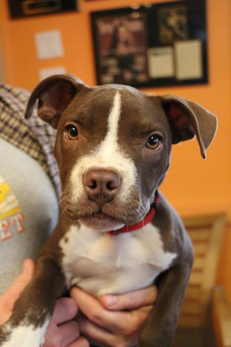 dog adoption new orleans