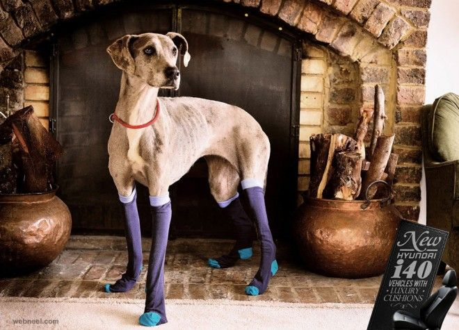 best ads dogs animal car hyundai