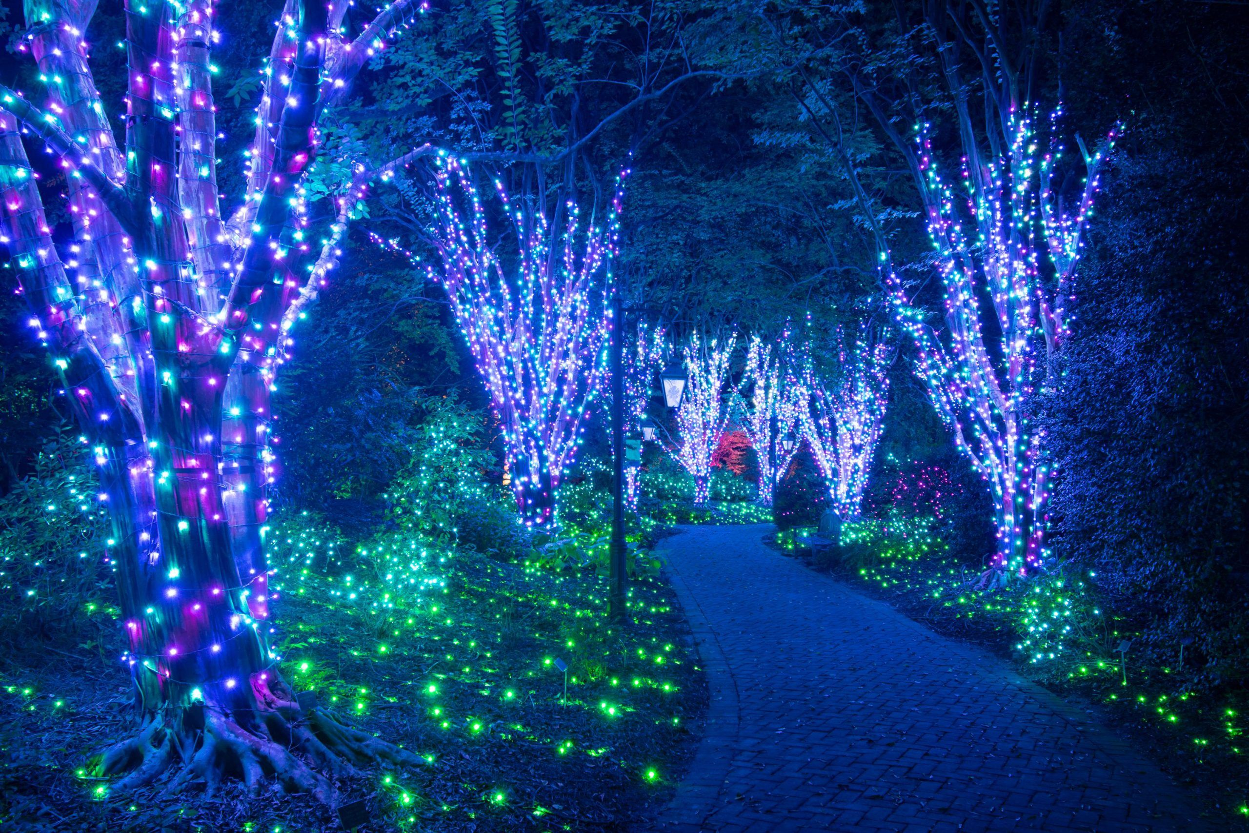 b10018299224e67d622b47cd9112026c - Lights At Botanical Gardens St Louis