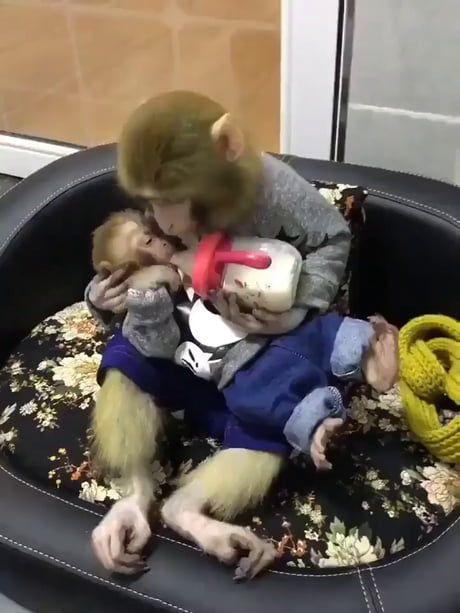 Monkey Mommy Love