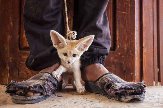 A teenager in Tunisia offering to sell a 3-month-old fennec fox. | 9 Wildlife Photographs That Are Heartbreaking, Eerie And Beautiful