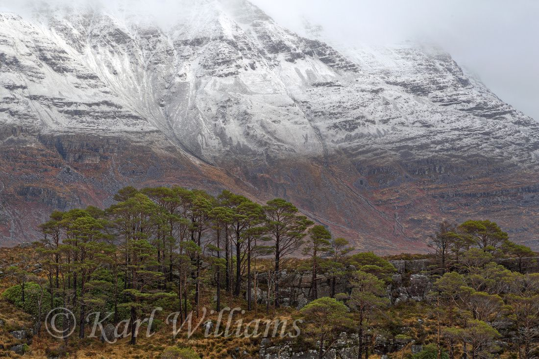 Torridon PinesThe massive slopes of Liathach dominate the view northwards from the slopes above the southern shore of Upper Loch Torridon.