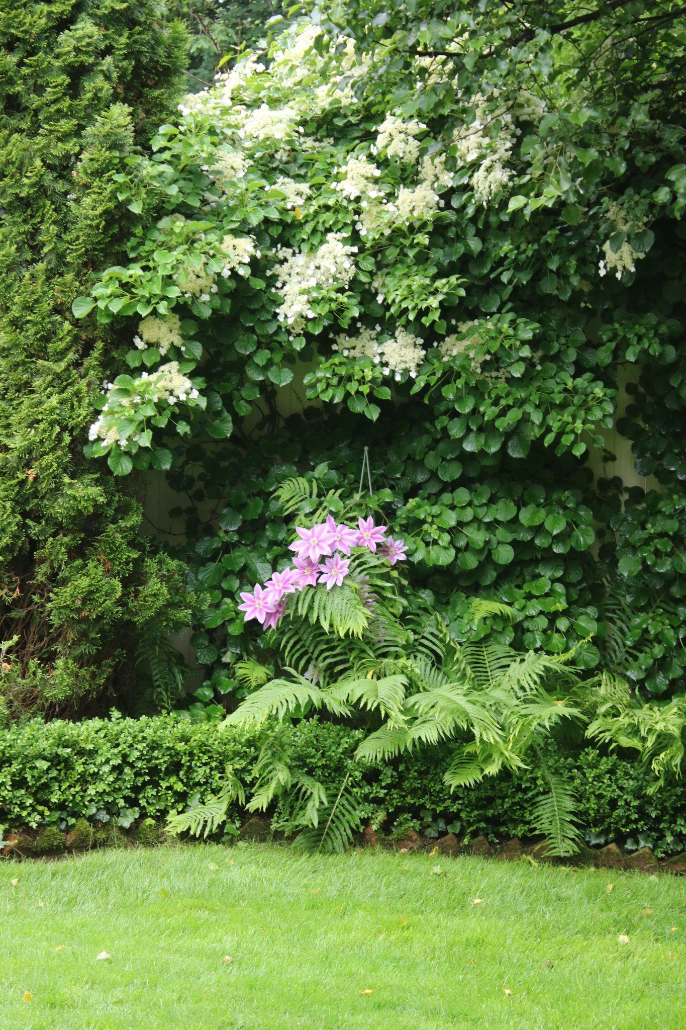 Pin by Katrina Spears on Zone 5 Gardening   Gardening tips ...