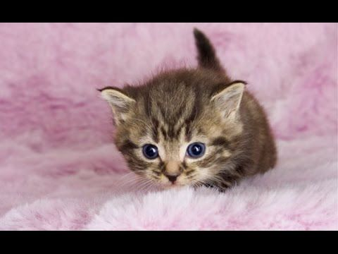A Top 10 Of One Of The Most Cutest Kittens In The World Check Out These Cute Fluffy Animals Cute Animals Baby Animals Pictures