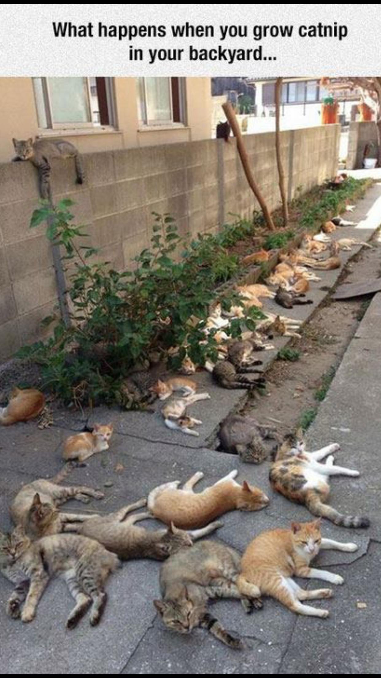 Pin by Constance Van Zandt on I Love Cats! Crazy cats