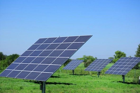 Growing Crops On Solar Power Farms Works As A Win Win Situation Solar Solar Panels Solar Energy Panels