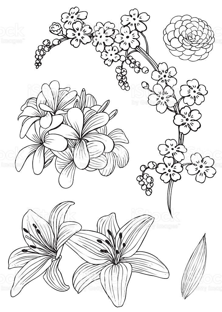 Hand Drawing Of Exotic Flowers Rendering As Vector And